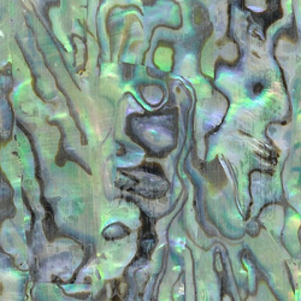 Paua Abalone Inlay Sheet